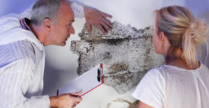 NJ Mold Testing vs. Mold Removal